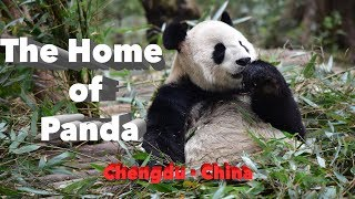 The home of Panda | Sichuan-China