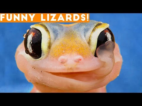 Ultimate Lizard Compilation of 2018 | Funny Pet Videos