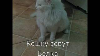 Отдам кошку в хорошие руки бесплатно!!!