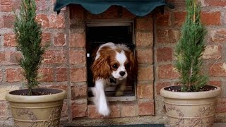 Doggie Doors | Doggie Doors For Large Dogs | Doggie Doors For Glass Sliding Doors
