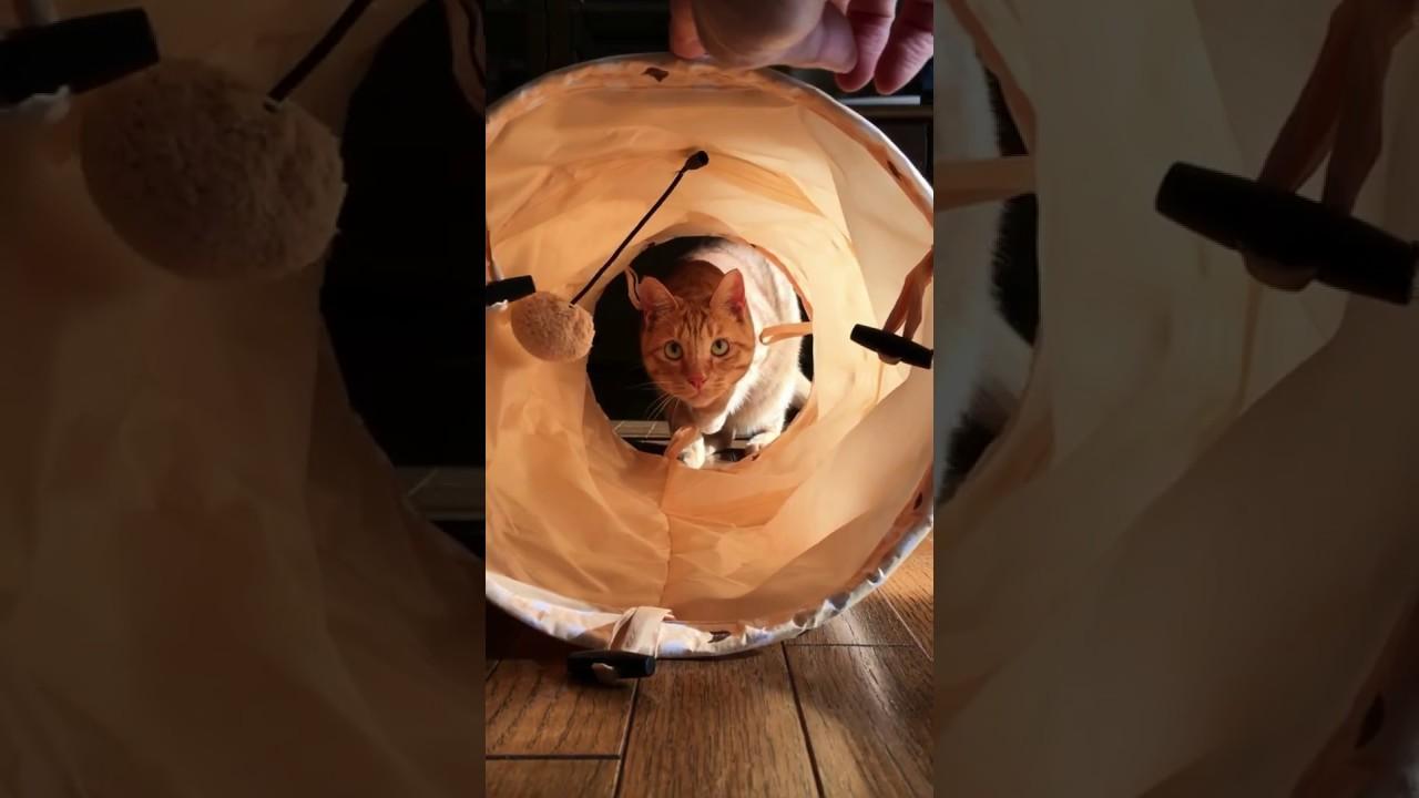 猫がおもちゃに飛びかかる瞬間をスロー再生