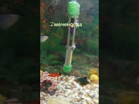 Мечта сбылась!!! Подарок на день рождения - аквариум 85 литров.