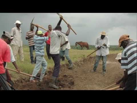 Rebuilding Haiti: Business by Business