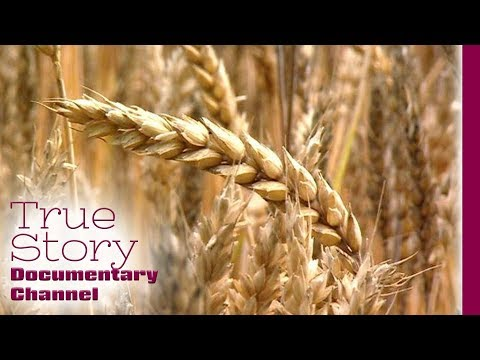 One Kilogram of Wheat - True Story Documentary Channel