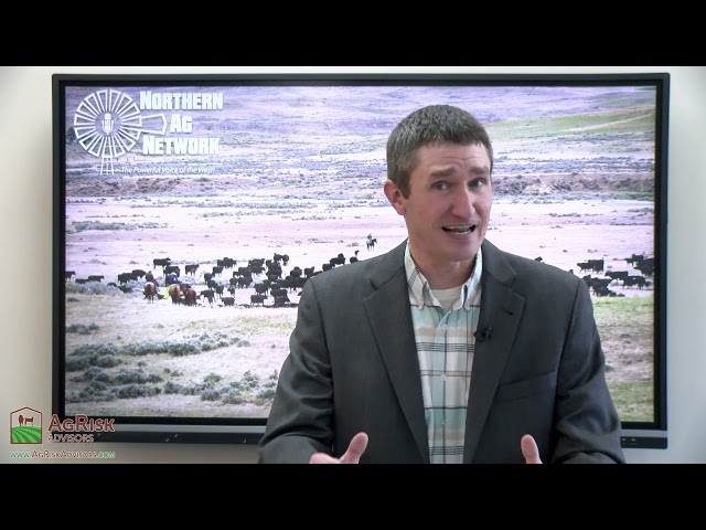 Surprising Buyer Response to First Livestock Video Sales of the Summer