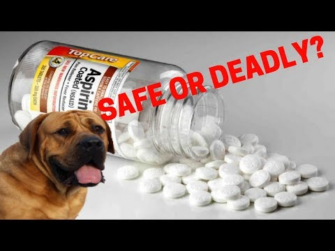 Are Human Pain Medications Safe For Dogs? Advil, Aspirin, etc.
