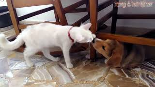 Funny Cats And Dogs   Funny Cats vs Dogs   Funny Animals Compilation