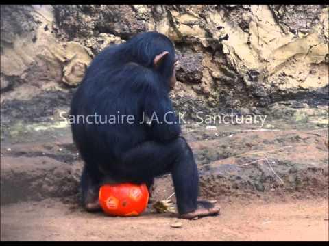 2014 02   Tommy & chimp PASA