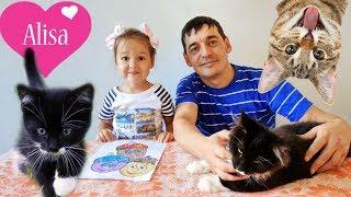 ПЕРЕДАЕМ ПРИВЕТЫ Алиса играет с котятами МЕЙН-КУН Смешные котята Детский канал Little baby Алиса