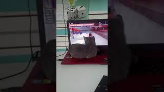 Mój Kot gra w Roblox