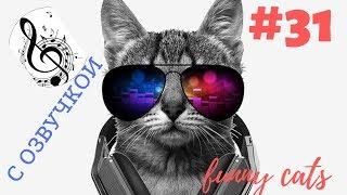 Приколы с котами под ОЗВУЧКУ, смешные коты  ТОП подборка #31 Смешные животные