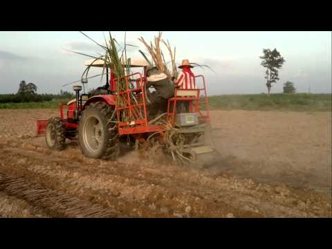 sugar cane plantation.mp4