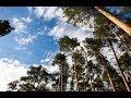 Дубль 2: Сосновый бор и карьер в центре Челябинска