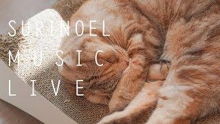 수리노을과 함께 음악 힐링 방송 19.6.8 LIVE 【SURI&NOEL】