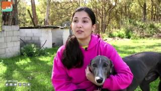 حول العالمفن و منوعات  أستراليا تتجه لحظر سباقات الكلاب السلوقية