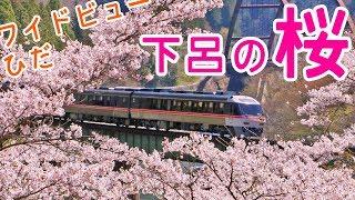 特急ワイドビューひだと桜!桜前線北上中!高山本線下呂にて