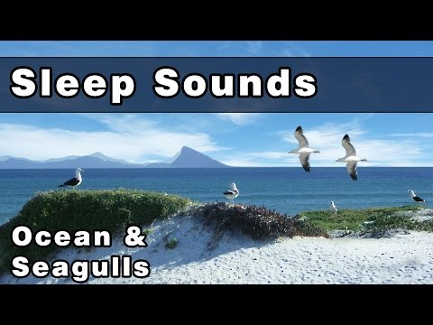 Soothing OCEAN WAVES & SEAGULLS Sleep Sounds: Sea Gull Sounds, Sounds of The Ocean, 12 Hours