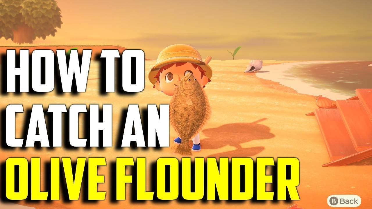 How To Catch An Olive Flounder Olive Flounder Acnh Olive Flounder Animal Crossing New Horizons Youtube Term limits for congress desperately needed. how to catch an olive flounder olive flounder acnh olive flounder animal crossing new horizons