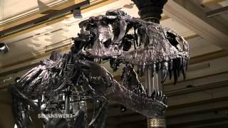 Sehenswert! // T-rex im Berliner Naturkundemuseum (Teil 2)
