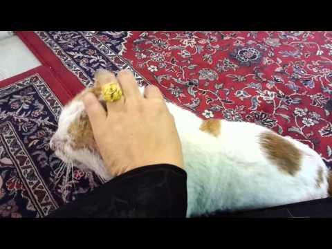 Dihampiri kucing di mesjid nabawi