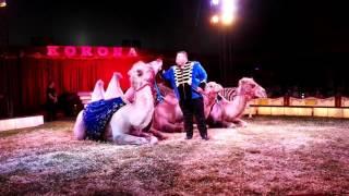 Cyrk Korona 2016 - pokaz zwierząt egzotycznych.