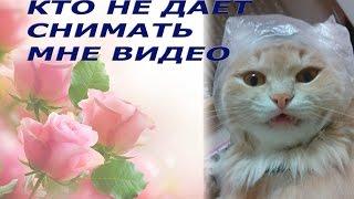 Кот на охоте. Прикольные видео с животными. Рыжий кот.