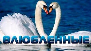 Влюбенные животные:) | Видеомонтаж, слайд шоу из фото и видео