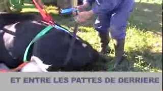 Lève-vache UPCOW - Farago Mayenne Anjou - lecarrefarago.com