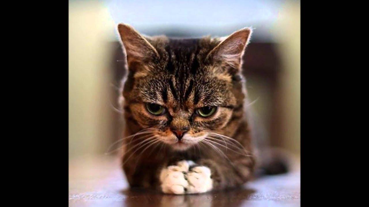 面白い顔の猫 ② \u203b笑いすぎに注意!!www , YouTube