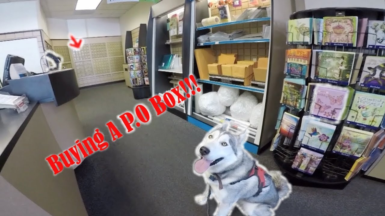 Husky Store Buying A P O Box Excited Siberian Husky Inside Ups Store