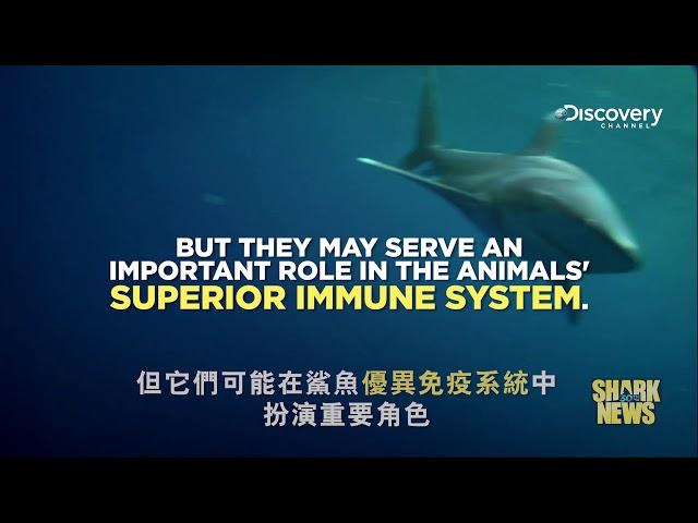 鯊魚週30週年特輯 Shark News : 治癒癌症