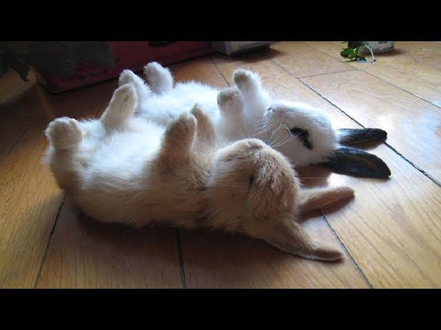 Funny Baby Bunny Rabbit Videos #2 – Cute Rabbits Compilation 2018