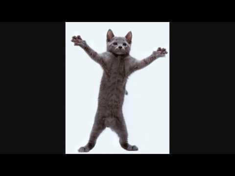 Cat, I'm a Kitty Cat and I Dance, Dance, Dance, Dance