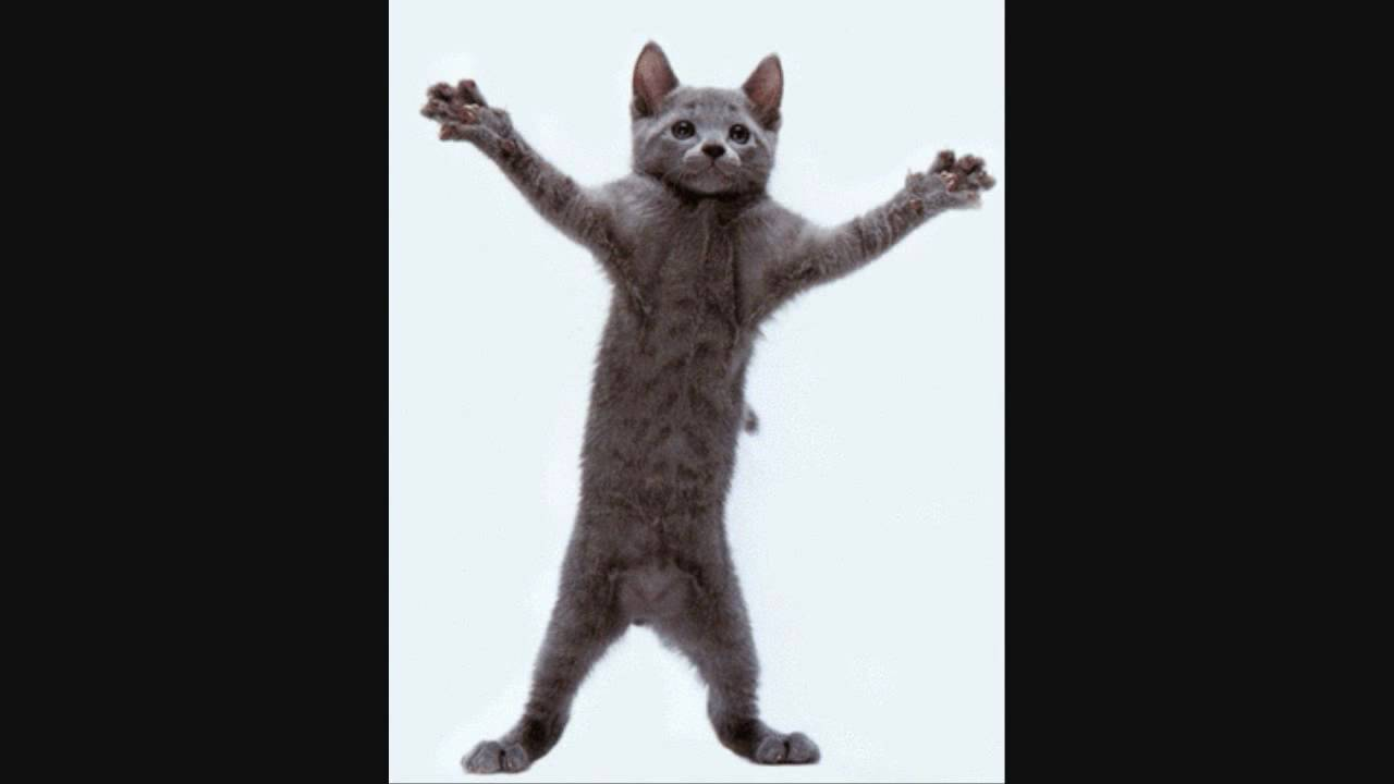 cat kitty cat dance