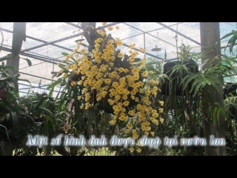 Giới thiệu về hoa lan - SOCSON FOREST.mp4