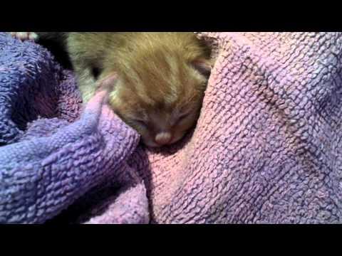 newborn kitten hours old.