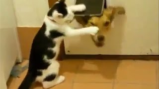Смешные коты Приколы с котами