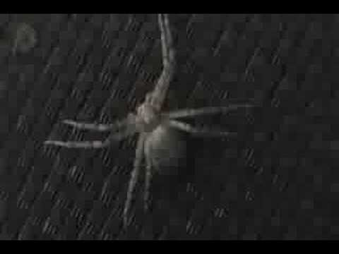 Random Spiders.