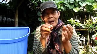 Indahnya Berbagi Part 51 Pembuatan Pestisida Alami Tabulampot , Sayuran , Tanama