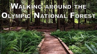 Panorama Photography in Olympic National Forest