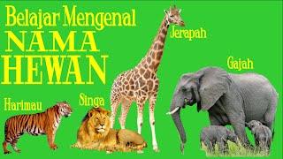 Belajar Nama Hewan [Margasatwa Seri 2] Harimau,Macan Tutul,Jerapah,Gajah,Singa