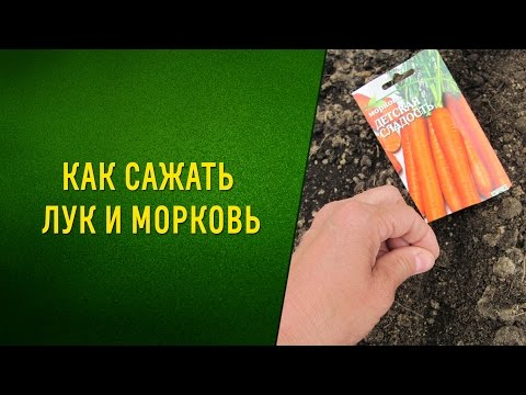 """Как правильно сажать морковь весной. Сроки посадки по лунному календарю 2019, регионам"""""""