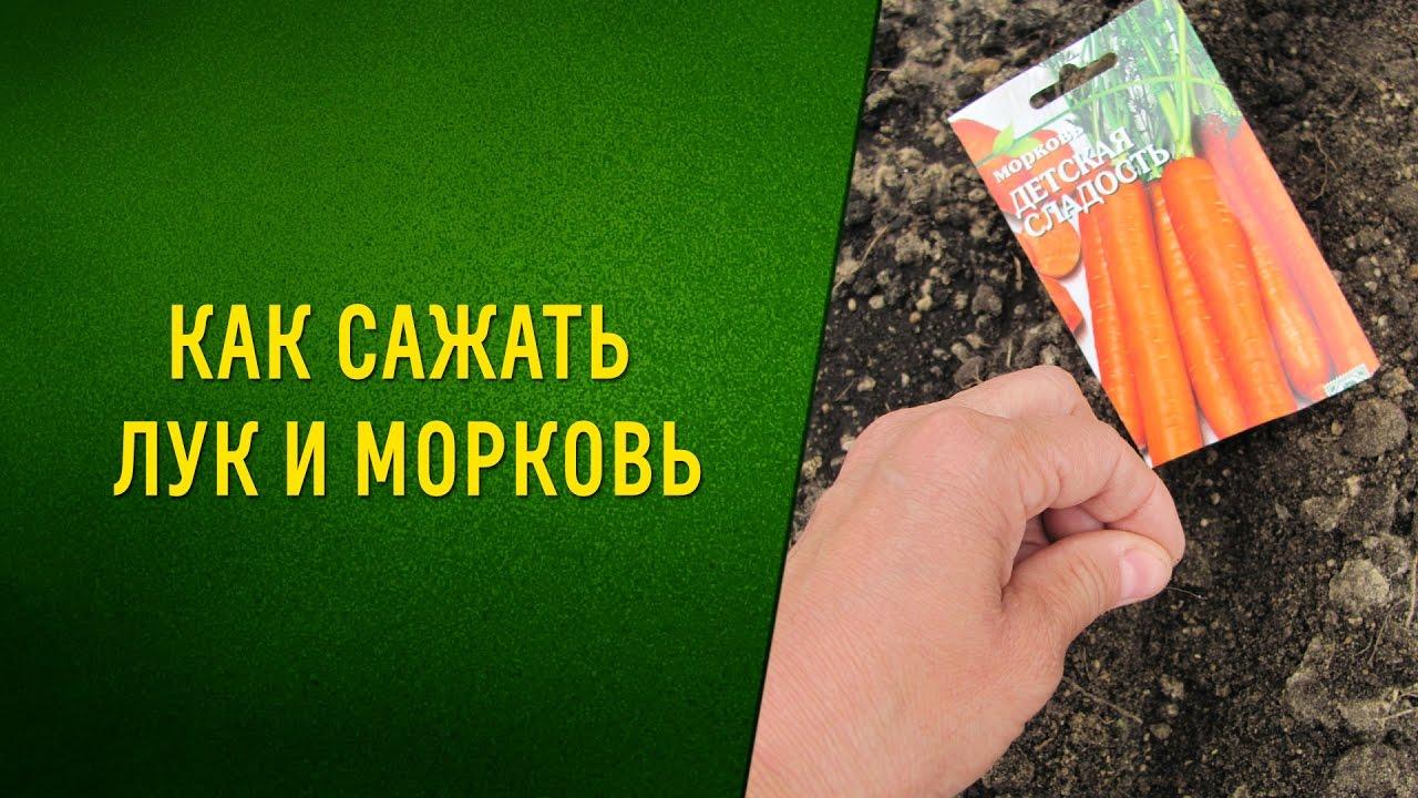 Совместные посадки. Морковь+лук= отличный урожай!