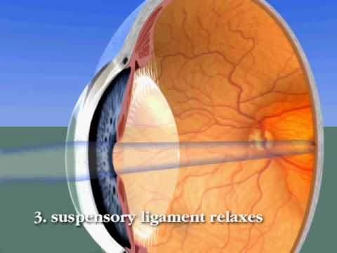 The Human Eye: Accommodation