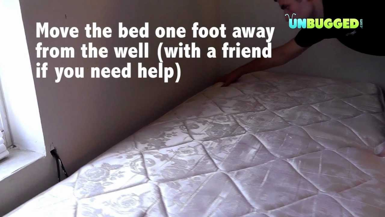 How To Stop Bed Bugs Move Furniture For Treatment Youtube