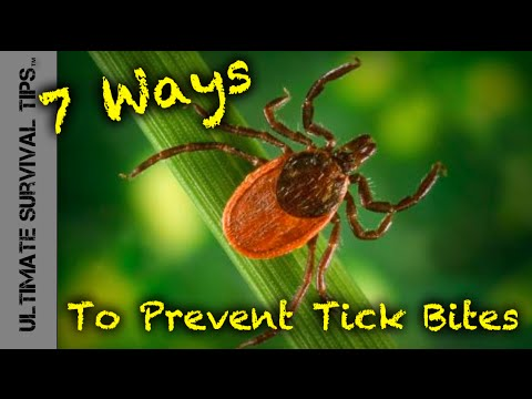 Peak Tick Season In CT And How To Protect Yourself