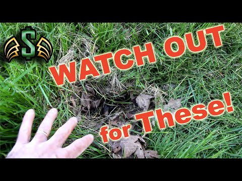 How To: Spot A Rabbit's Nest | SMTV 🔥Quick Tip!