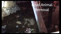 Louisville Dead Animal Removal | Carcass Removal