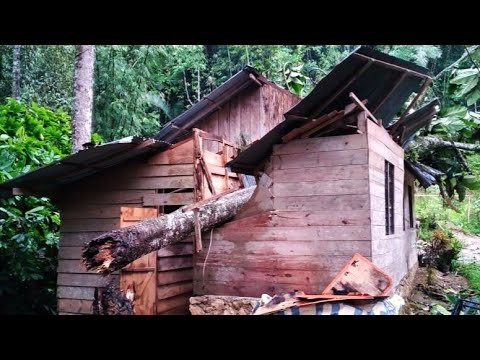 Pohon Tumbang Menimpa Rumah Warga