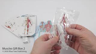 Muscles Gift Box Set 02 Video